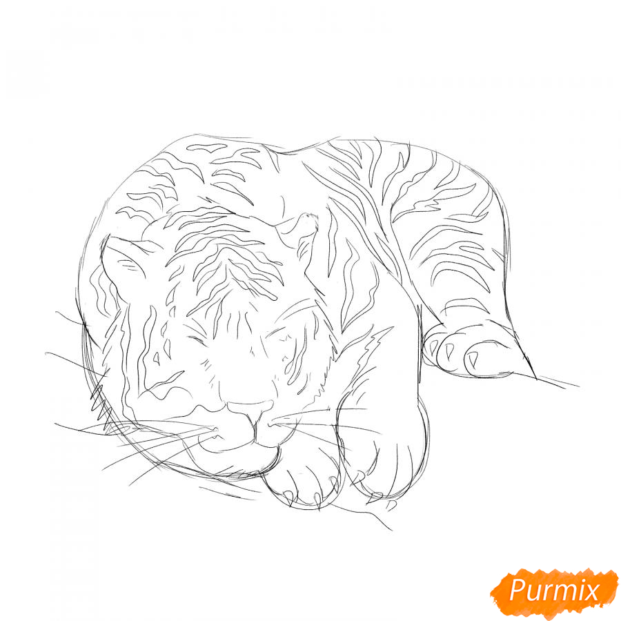 Рисуем лежащего белого тигра - шаг 4