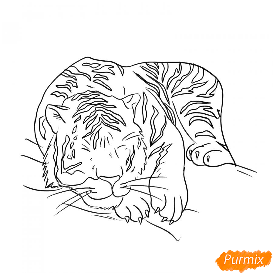 Рисуем лежащего белого тигра - шаг 5