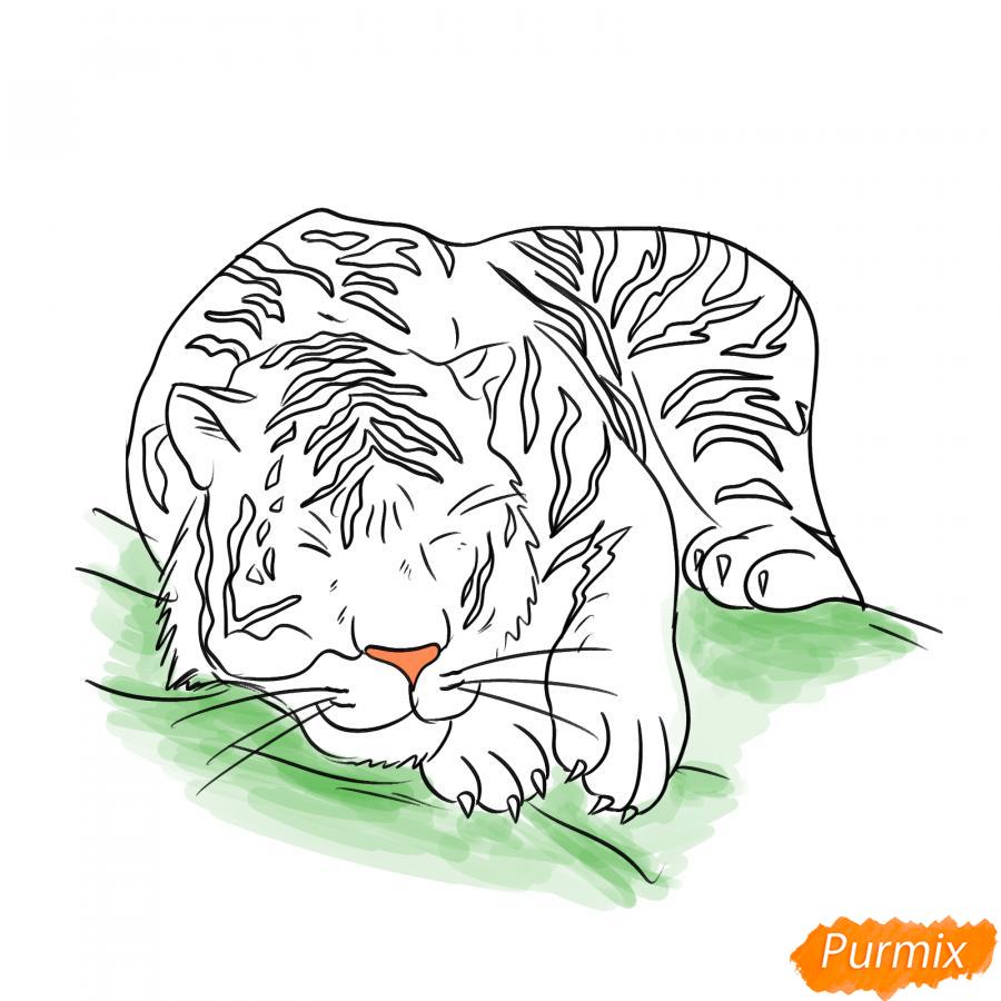Рисуем лежащего белого тигра - шаг 6