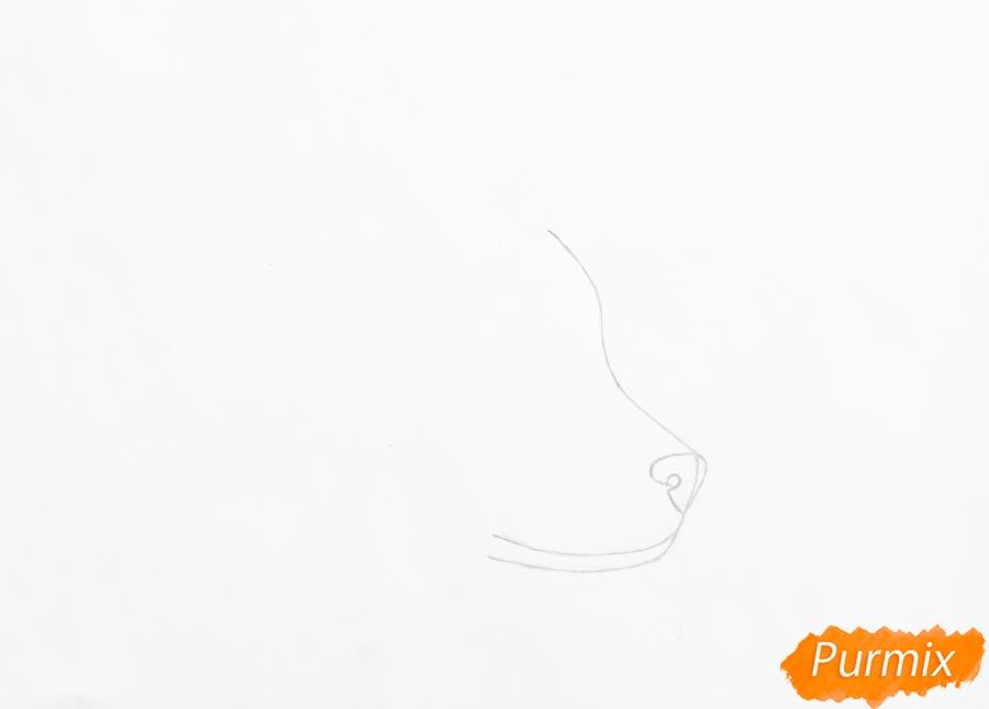 Рисуем лежащего голубоглазого щенка хаски - шаг 1