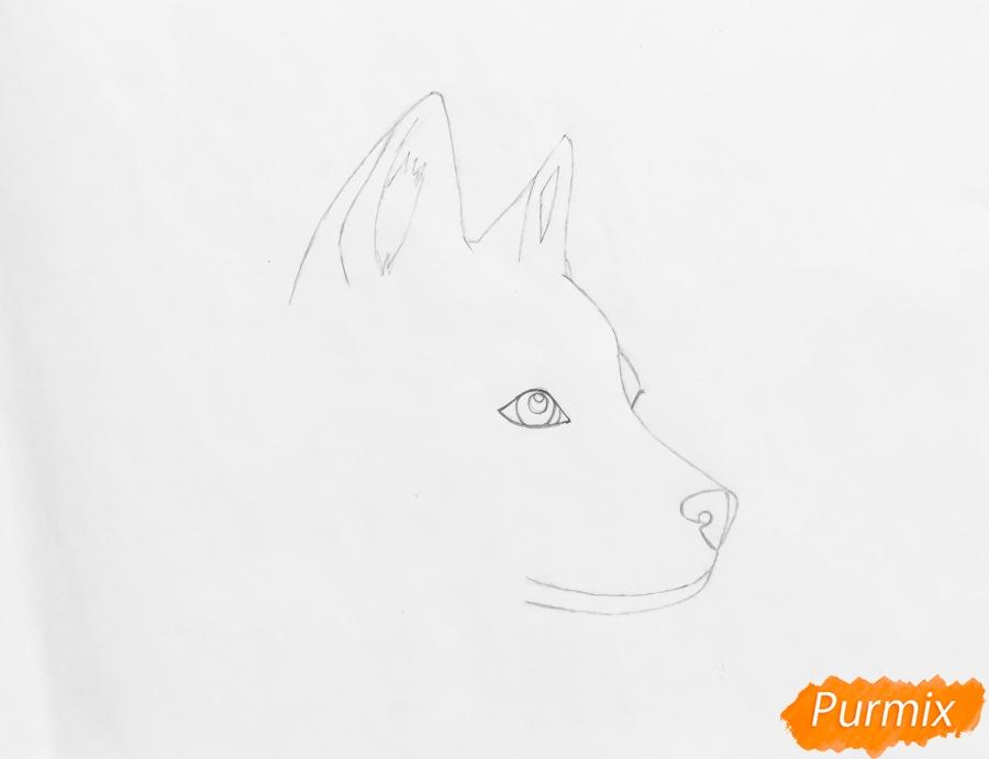 Рисуем лежащего голубоглазого щенка хаски - шаг 2
