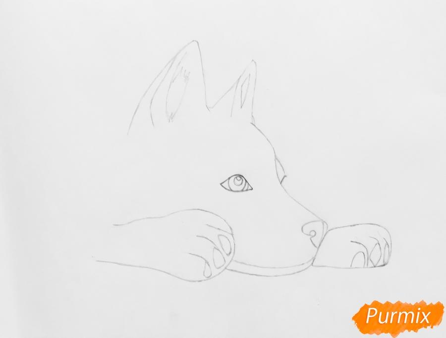 Рисуем лежащего голубоглазого щенка хаски - шаг 3