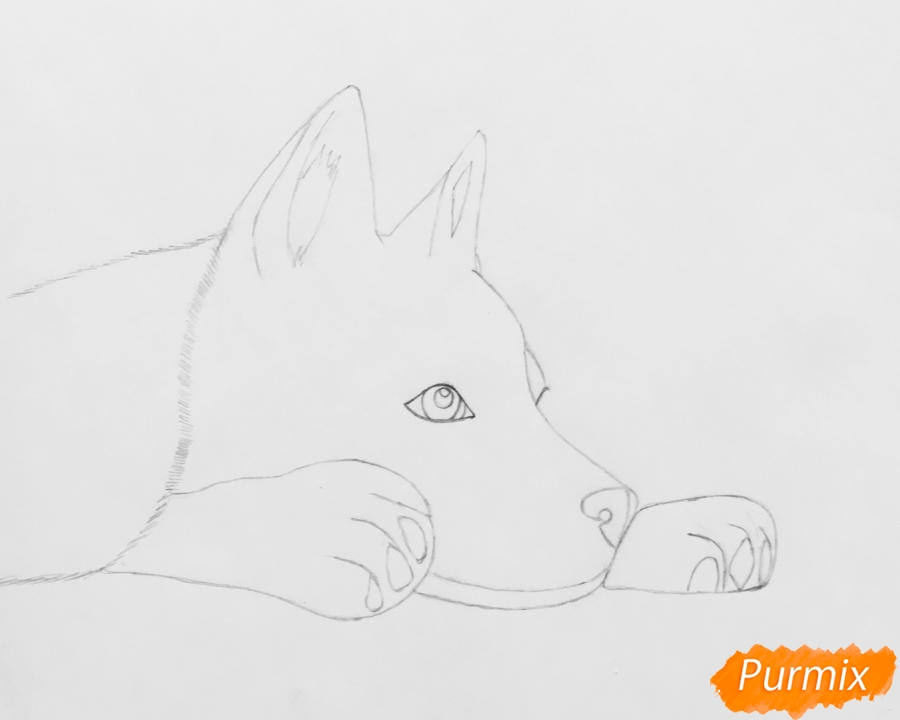 Рисуем лежащего голубоглазого щенка хаски - шаг 4