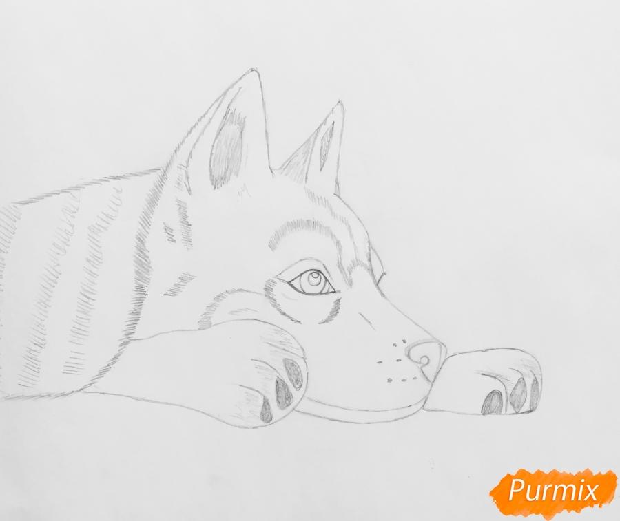 Рисуем лежащего голубоглазого щенка хаски - шаг 5