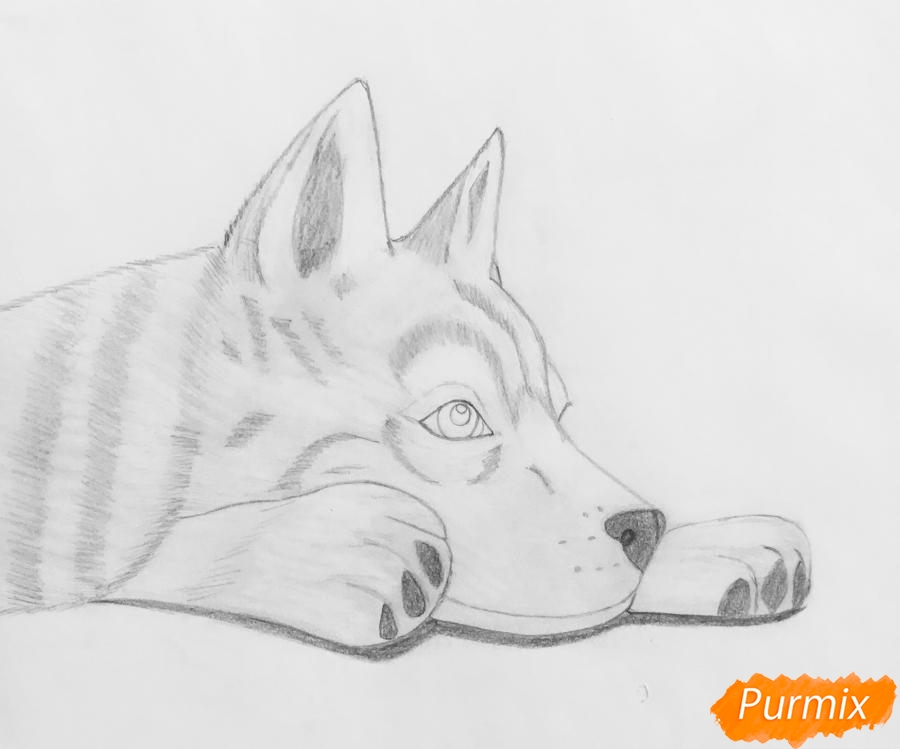 Рисуем лежащего голубоглазого щенка хаски - шаг 7