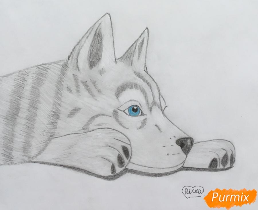 Рисуем лежащего голубоглазого щенка хаски - шаг 8