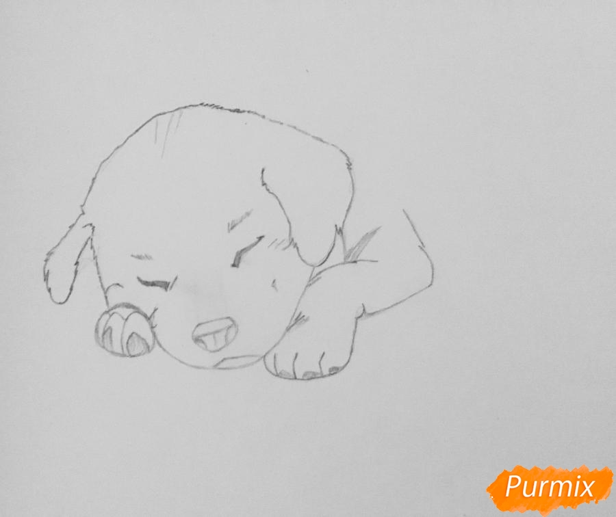 Рисуем  милого спящего щеночка возле чашки кофе - шаг 2