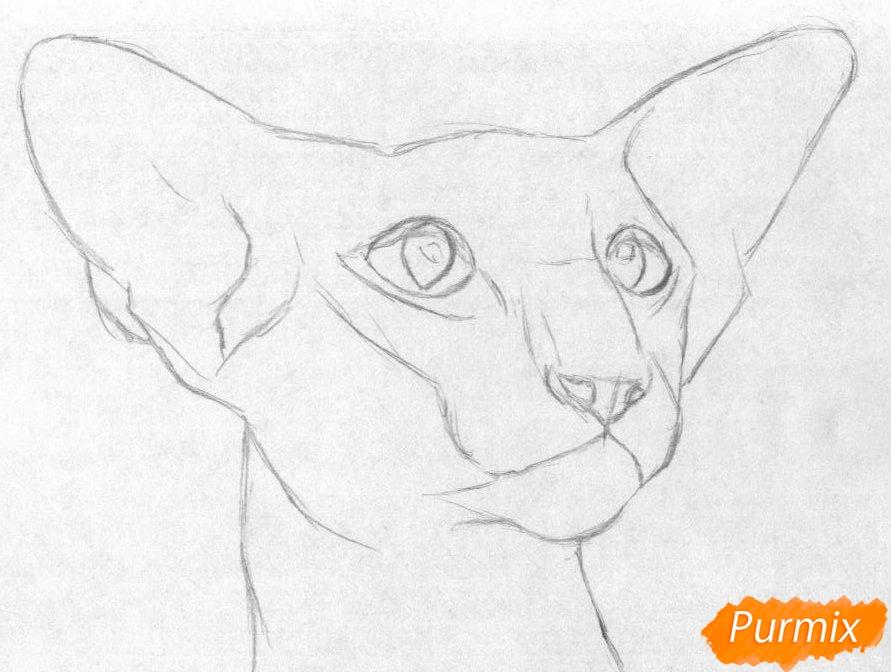 Рисуем ориентальную кошку - шаг 1