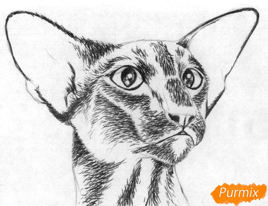 Рисуем ориентальную кошку - шаг 2