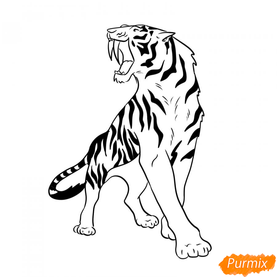 Рисуем саблезубого тигра карандашами - шаг 6