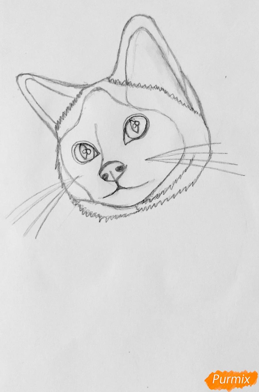 Рисуем сиамскую кошечку в мультяшном стиле цветными карандашами - шаг 1