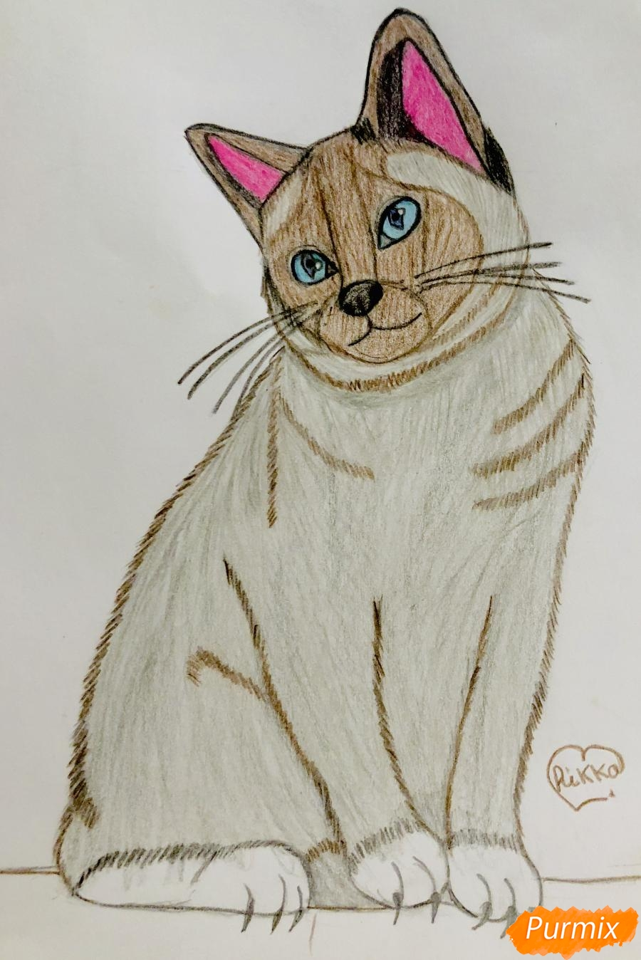 Рисуем сиамскую кошечку в мультяшном стиле цветными карандашами - шаг 10