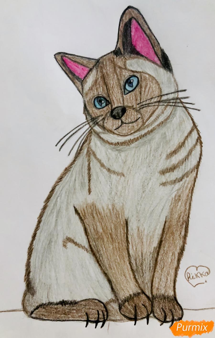 Рисуем сиамскую кошечку в мультяшном стиле цветными карандашами - шаг 11