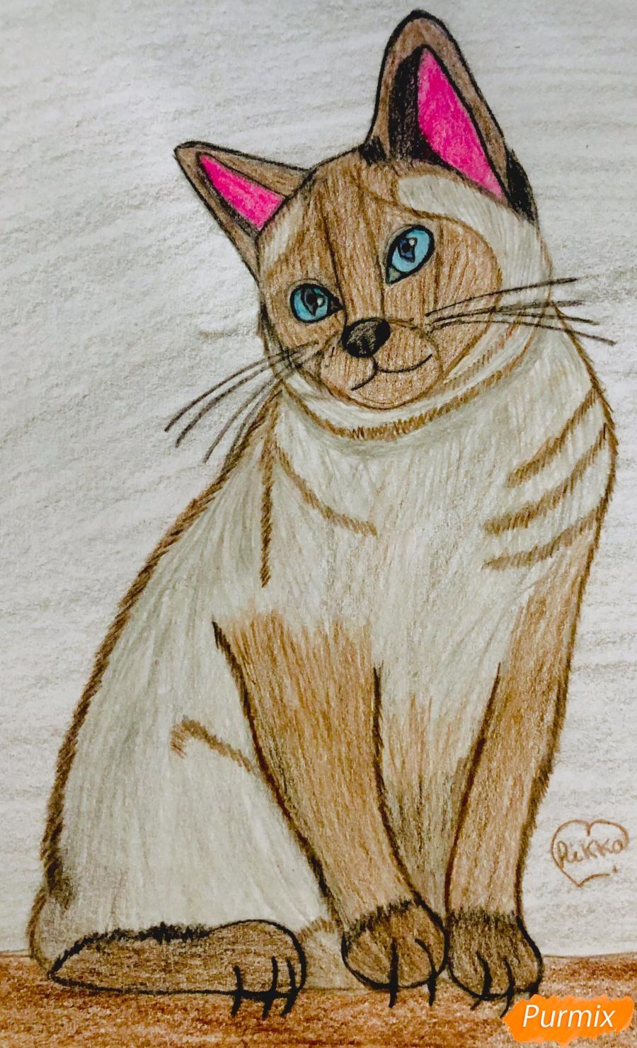 Рисуем сиамскую кошечку в мультяшном стиле цветными карандашами - шаг 12