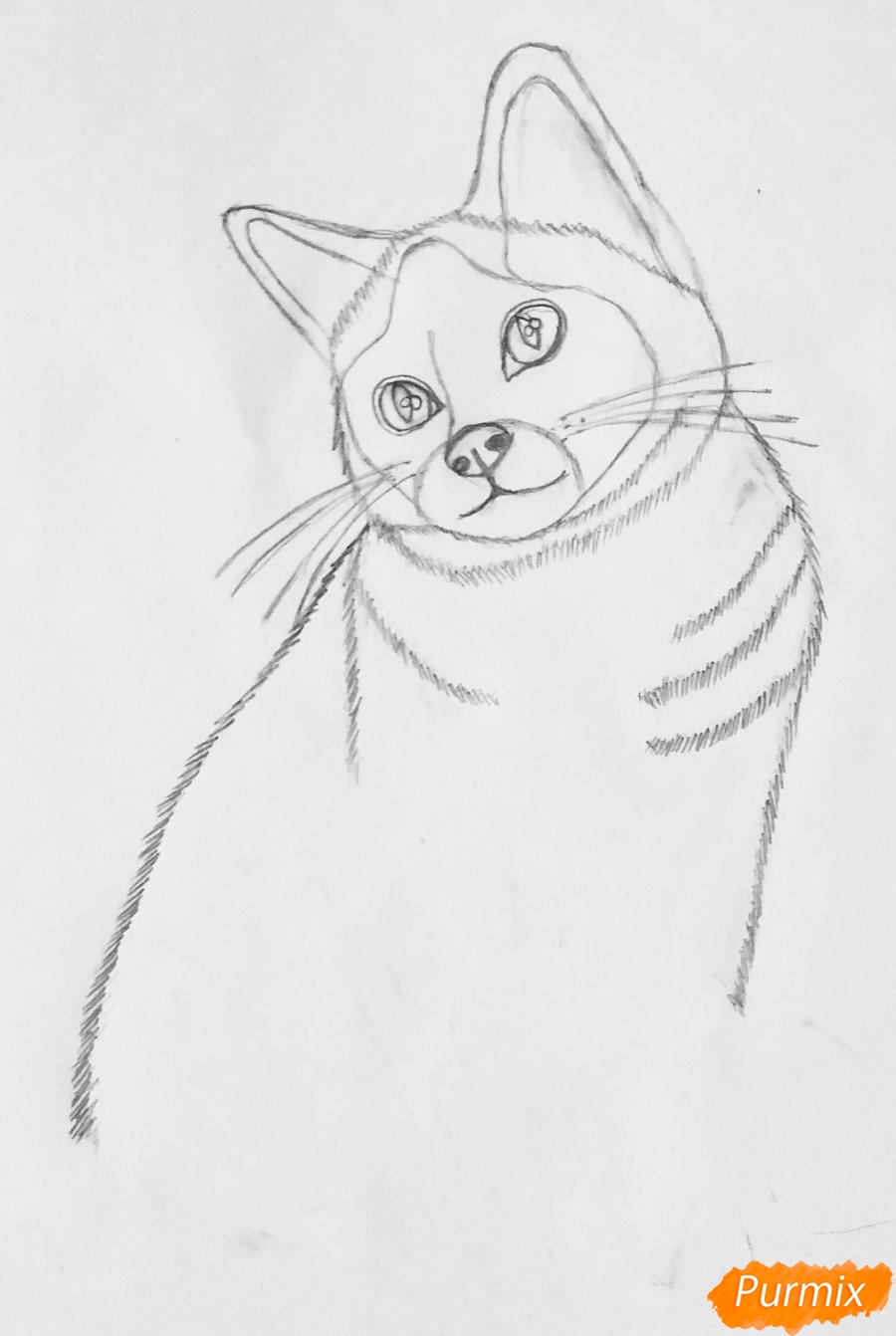 Рисуем сиамскую кошечку в мультяшном стиле цветными карандашами - шаг 2