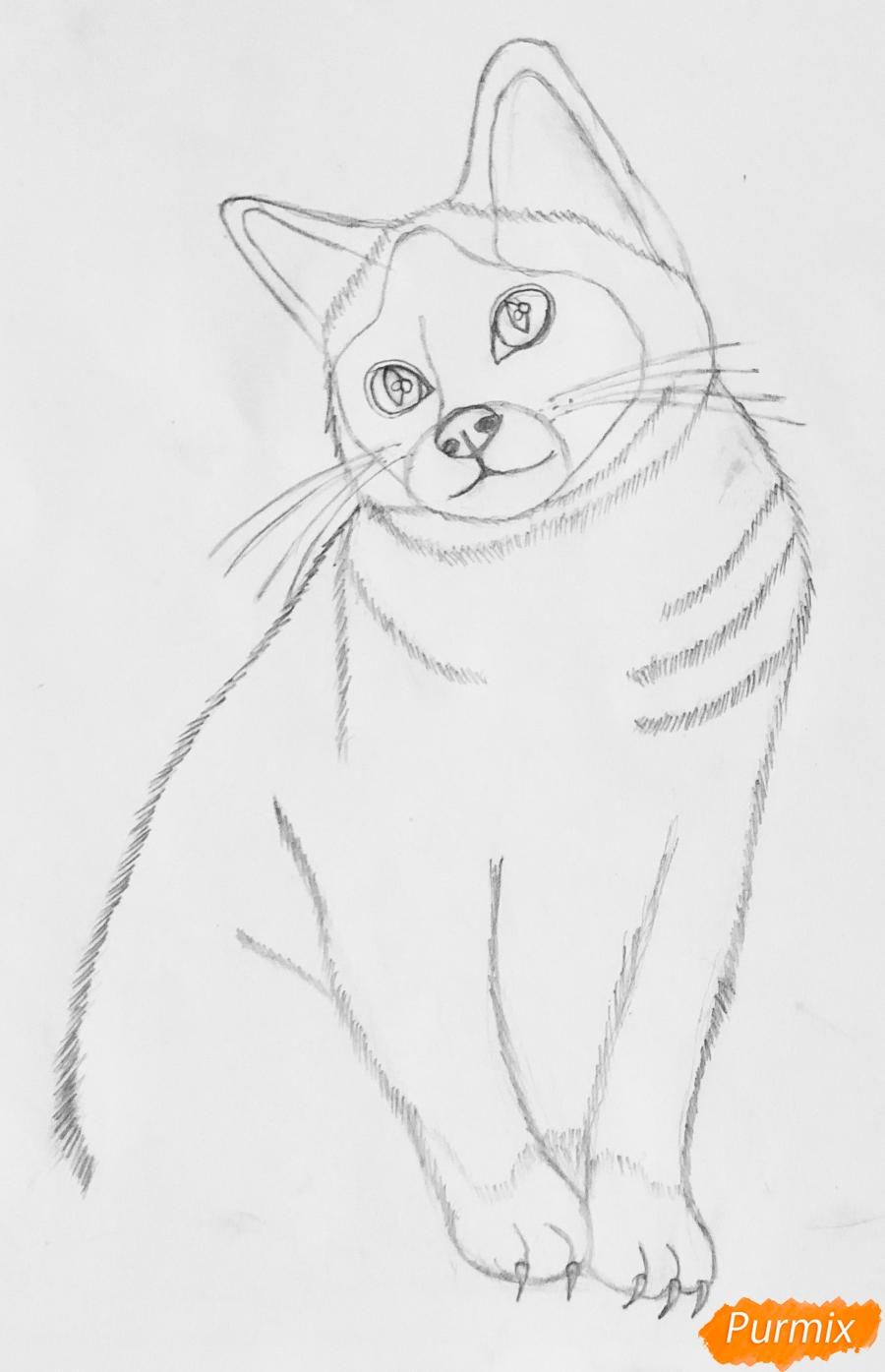 Рисуем сиамскую кошечку в мультяшном стиле цветными карандашами - шаг 3