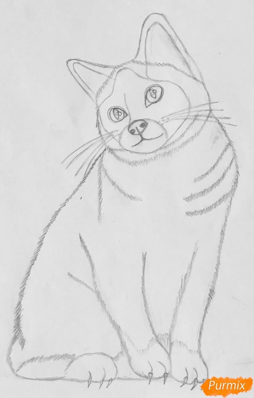 Рисуем сиамскую кошечку в мультяшном стиле цветными карандашами - шаг 4