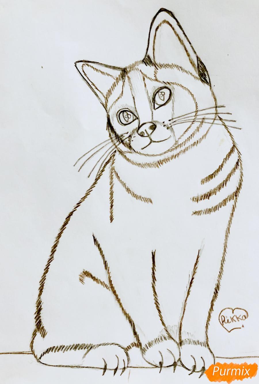 Рисуем сиамскую кошечку в мультяшном стиле цветными карандашами - шаг 6