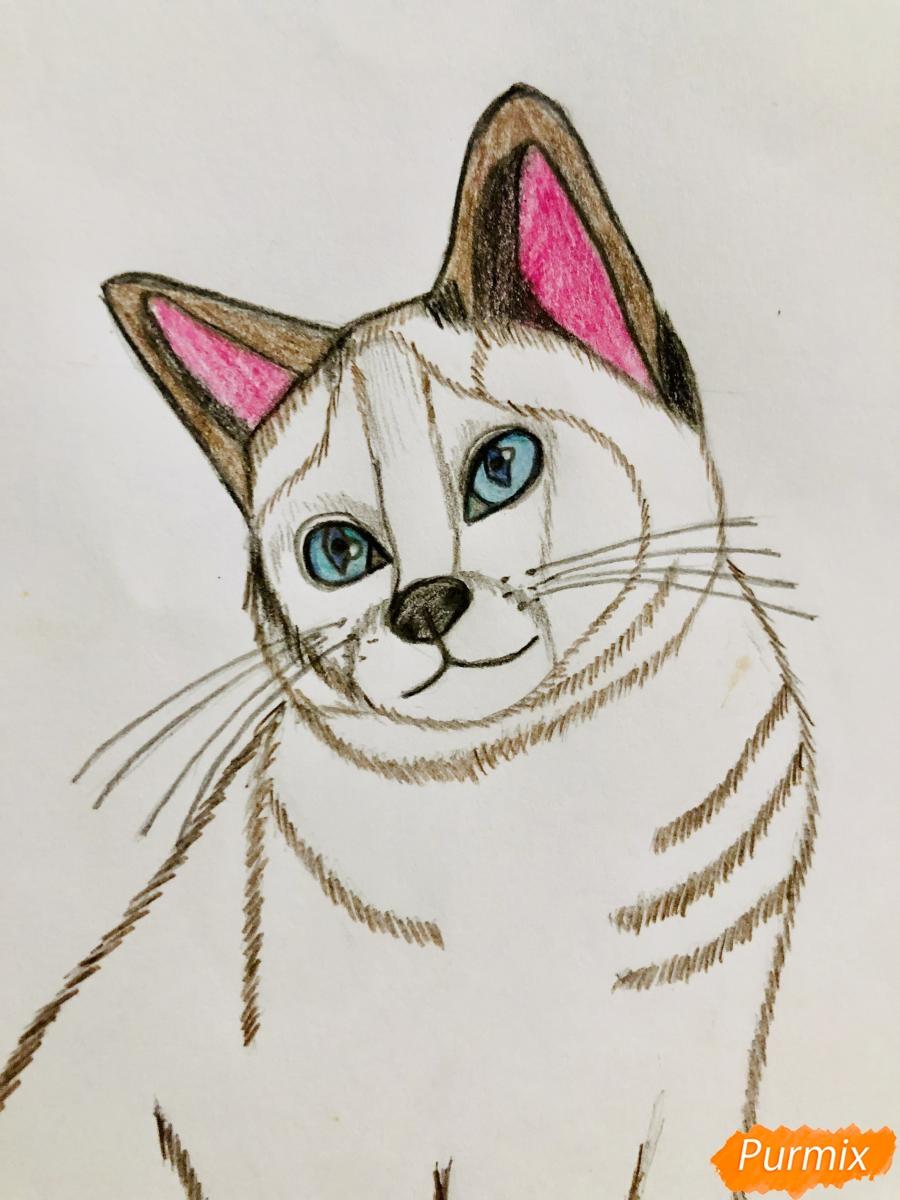 Рисуем сиамскую кошечку в мультяшном стиле цветными карандашами - шаг 7