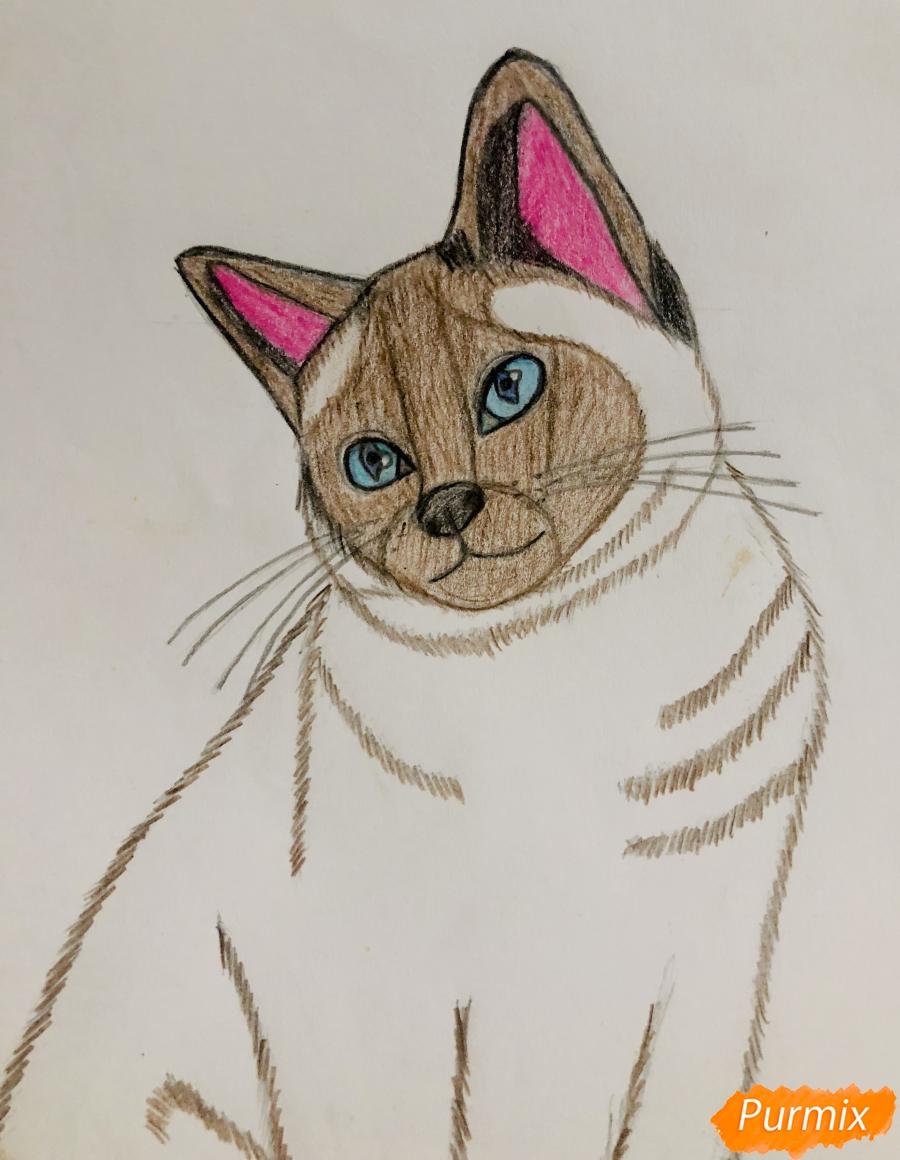 Рисуем сиамскую кошечку в мультяшном стиле цветными карандашами - шаг 8
