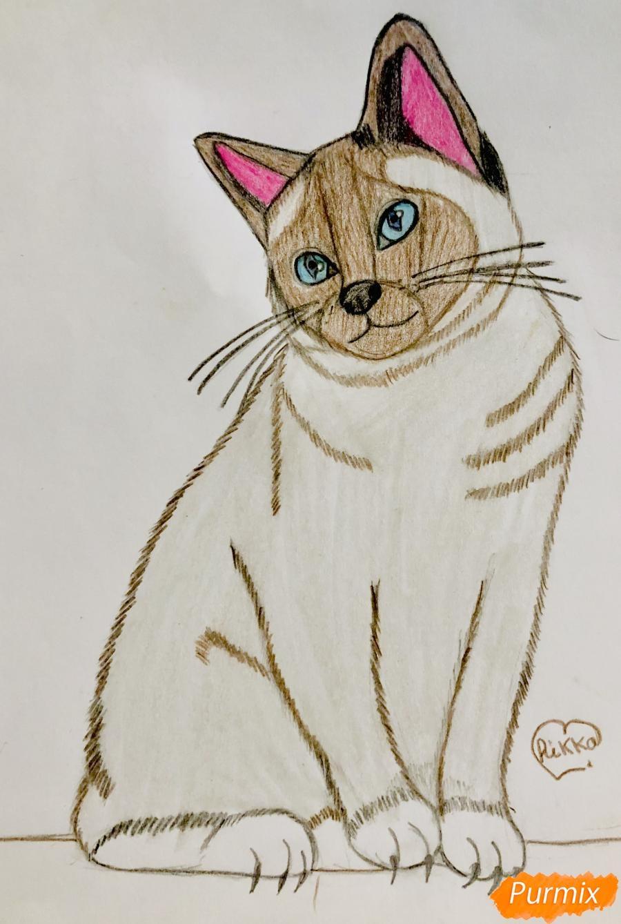 Рисуем сиамскую кошечку в мультяшном стиле цветными карандашами - шаг 9