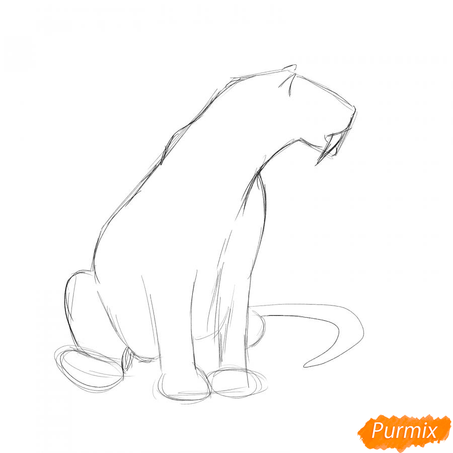 Рисуем сидящего саблезубого тигра - шаг 2