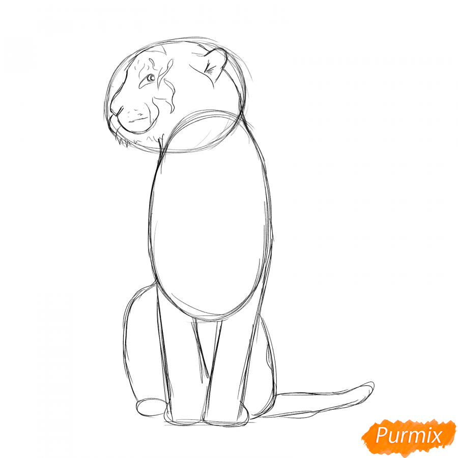 Рисуем сидящего тигра карандашами - шаг 3