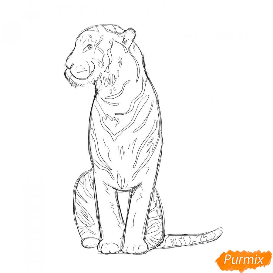 Рисуем сидящего тигра карандашами - шаг 4