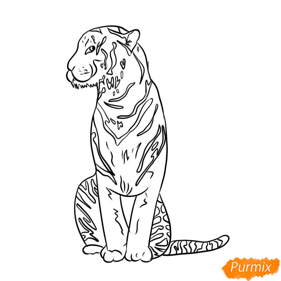 Рисуем сидящего тигра карандашами - шаг 5