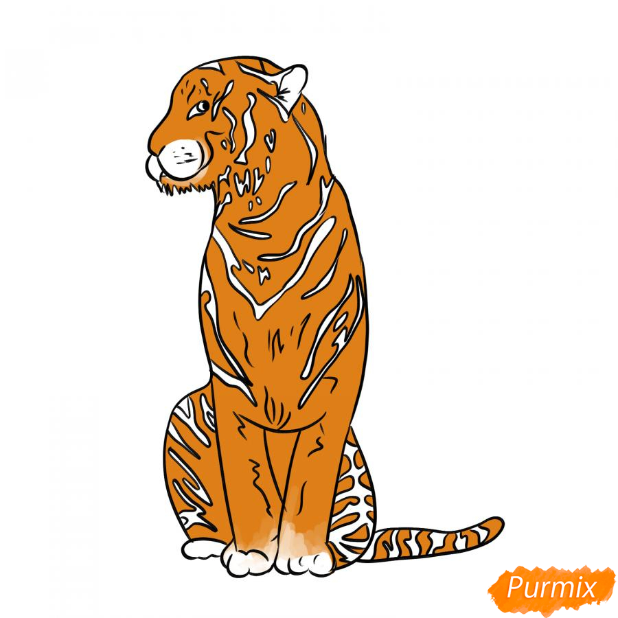 Рисуем сидящего тигра карандашами - шаг 6