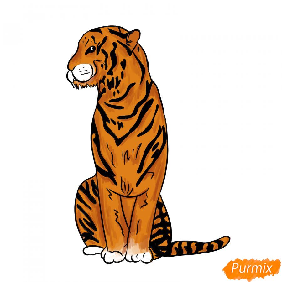 Рисуем сидящего тигра карандашами - шаг 8