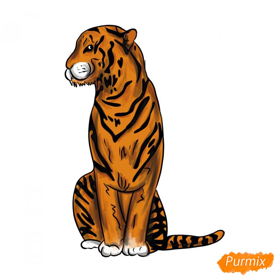 Рисуем сидящего тигра карандашами - шаг 9
