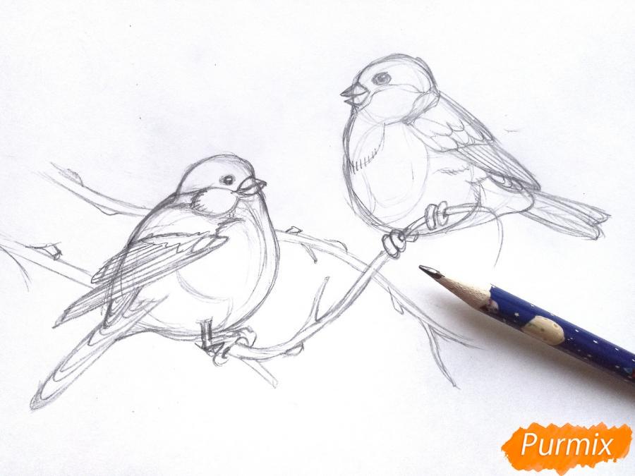 Рисуем снегирей на ветке зимой карандашами - шаг 4
