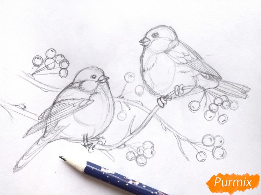 Рисуем снегирей на ветке зимой карандашами - шаг 5