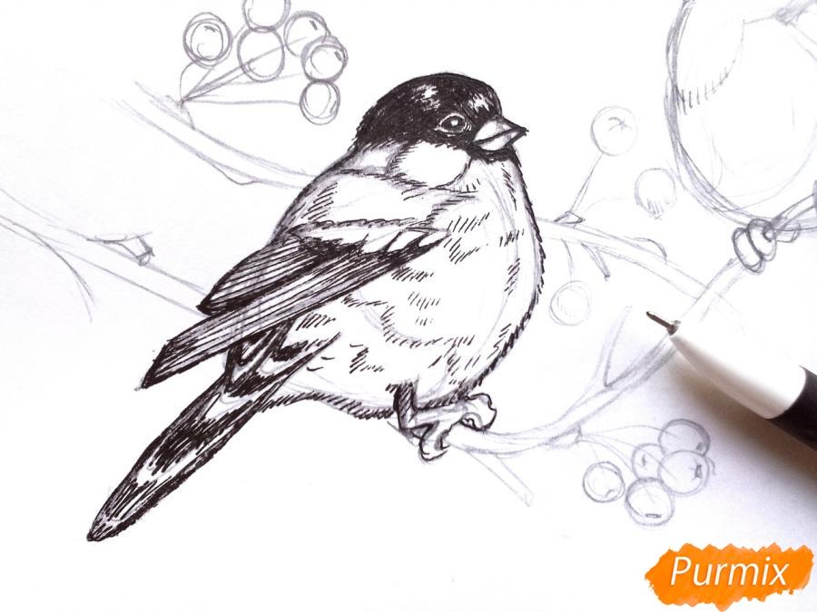 Рисуем снегирей на ветке зимой карандашами - шаг 6
