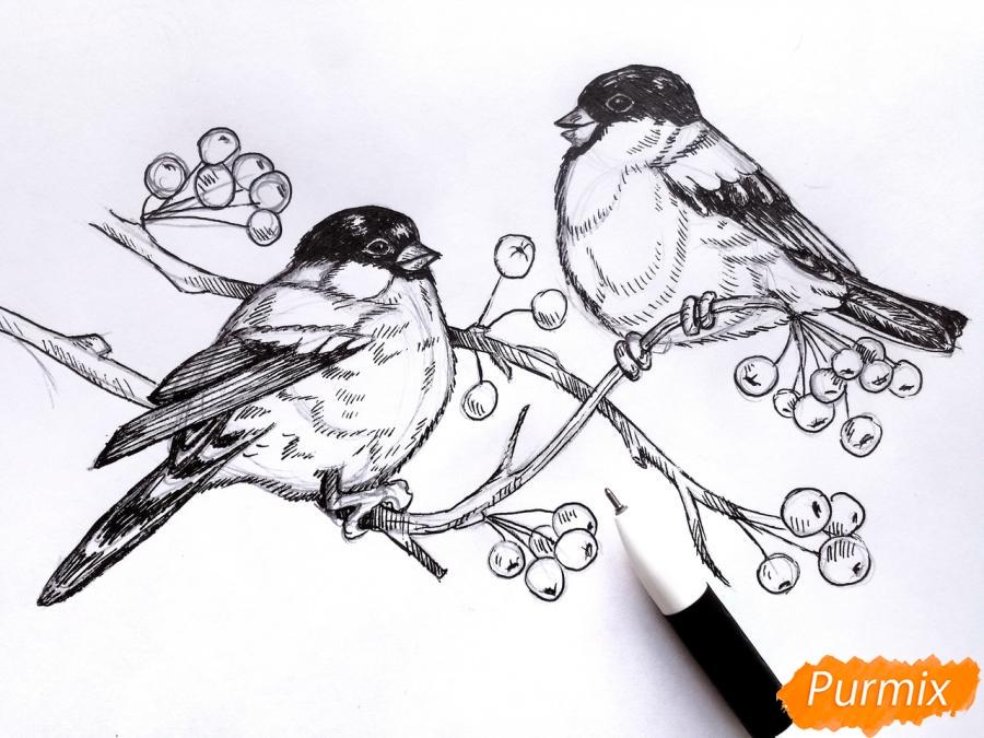 Рисуем снегирей на ветке зимой карандашами - шаг 7