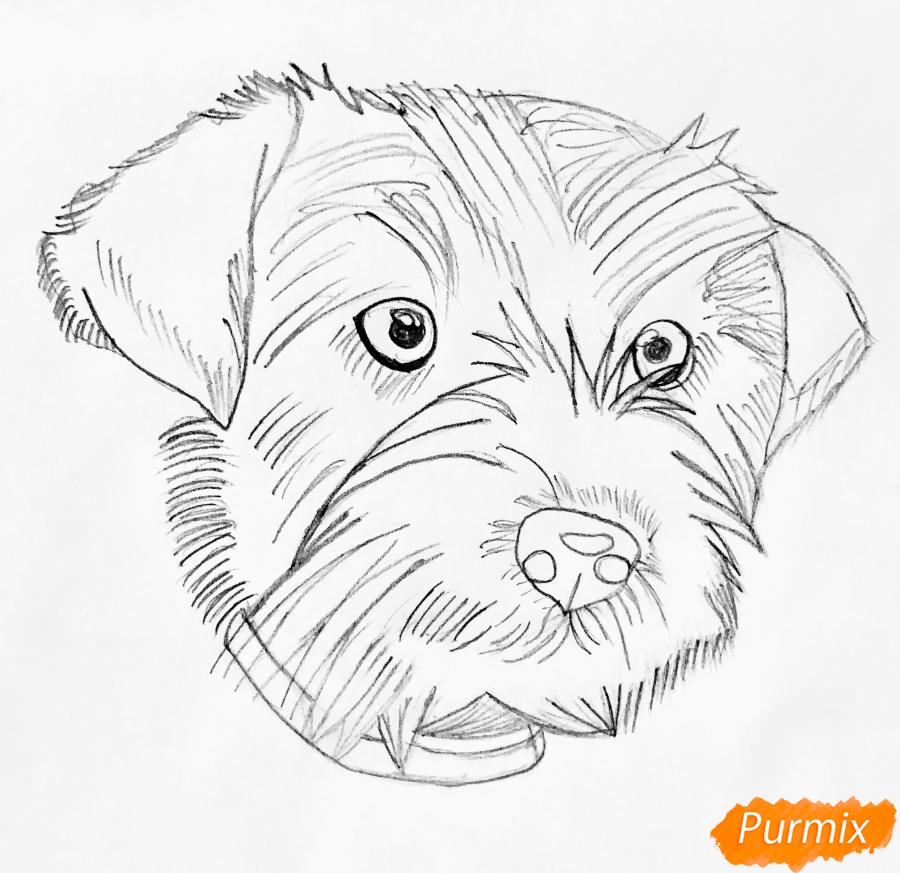 Рисуем собаку породы Джек-рассел-терьер - шаг 2