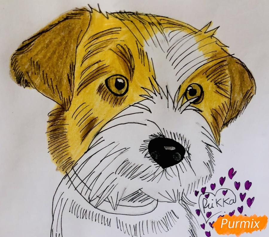 Рисуем собаку породы Джек-рассел-терьер - шаг 5