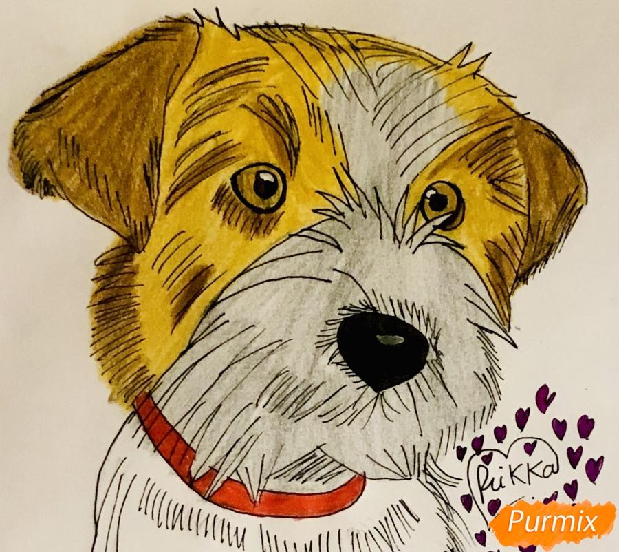 Рисуем собаку породы Джек-рассел-терьер - шаг 6