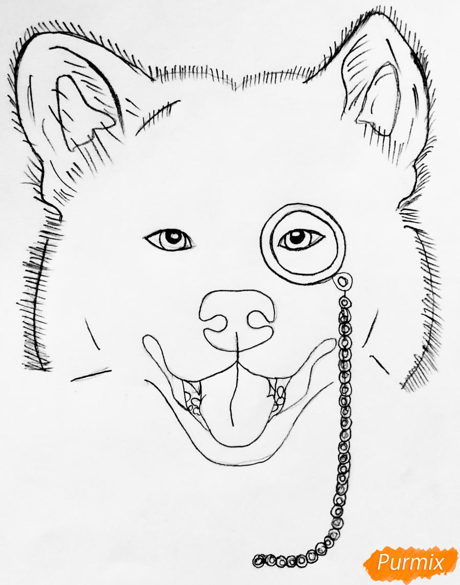 Рисуем собаку породы Сиба Ину с шарфиком цветными карандашами - шаг 3