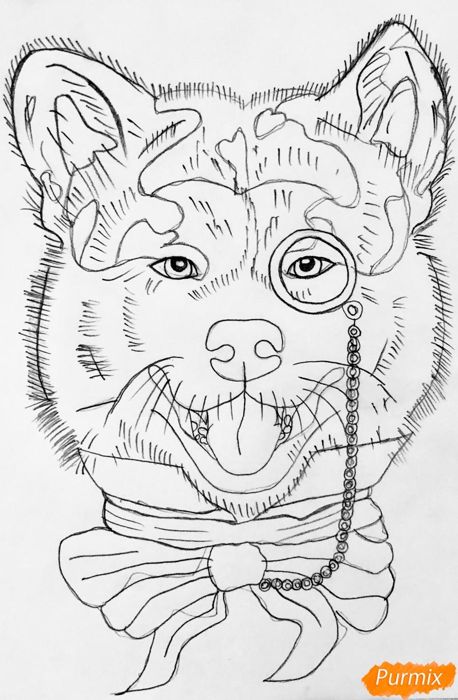 Рисуем собаку породы Сиба Ину с шарфиком цветными карандашами - шаг 5