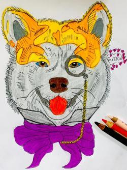 собаку Сиба Ину с шарфиком цветными карандашами