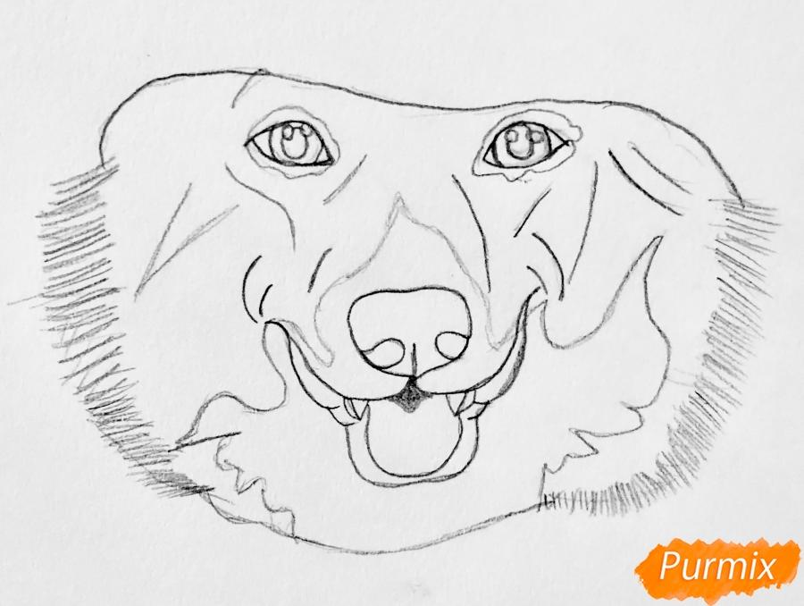 Рисуем собаку породы Вельш-корги пемброк с шляпой цветными карандашами - шаг 2