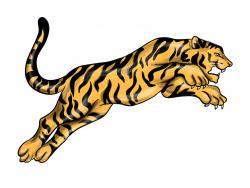 тигра в прыжке