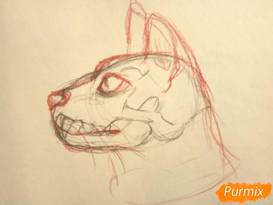 Лекция: общие основы анатомии хищных млекопитающих