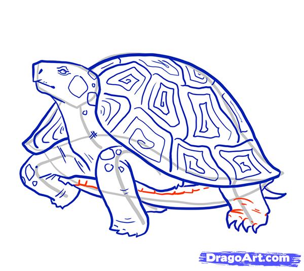 Рисуем стоящую черепаху - шаг 11