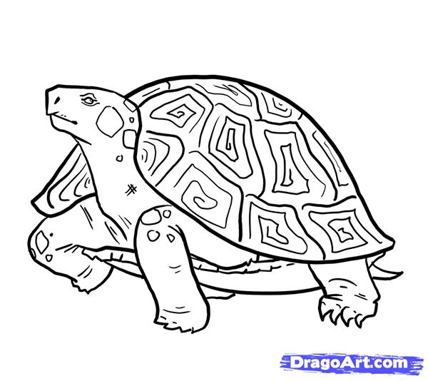 Рисуем стоящую черепаху - шаг 12