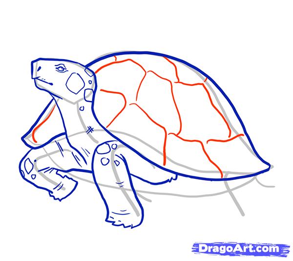 Рисуем стоящую черепаху - шаг 8