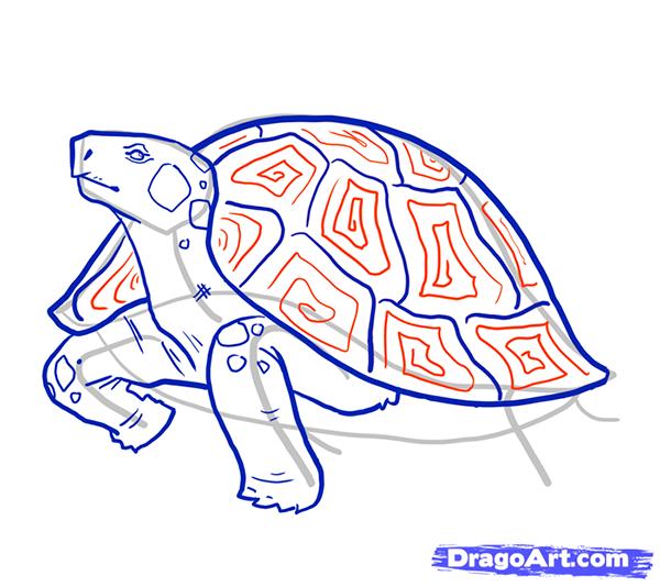 Рисуем стоящую черепаху - шаг 9