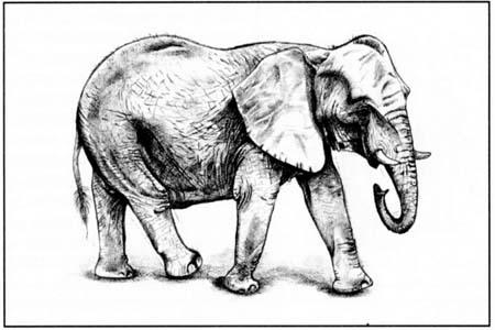 Рисуем слона в движении - шаг 5